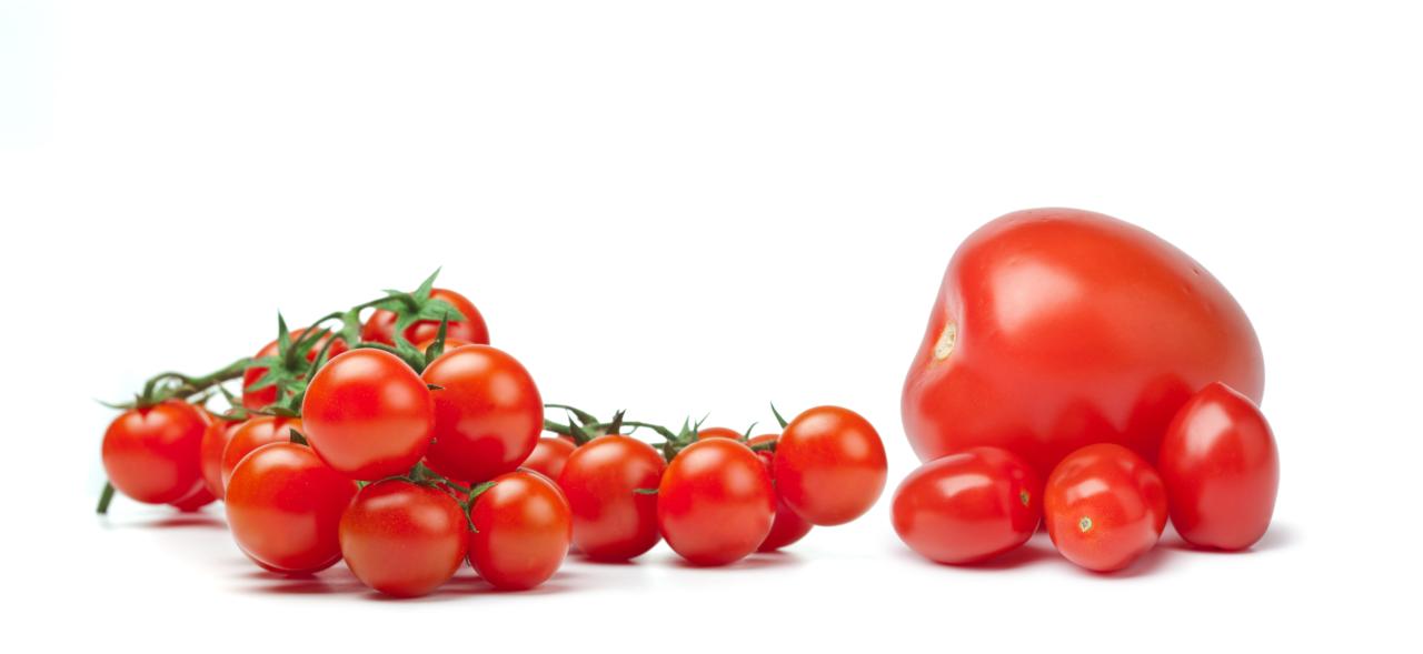 tomate-vicasol