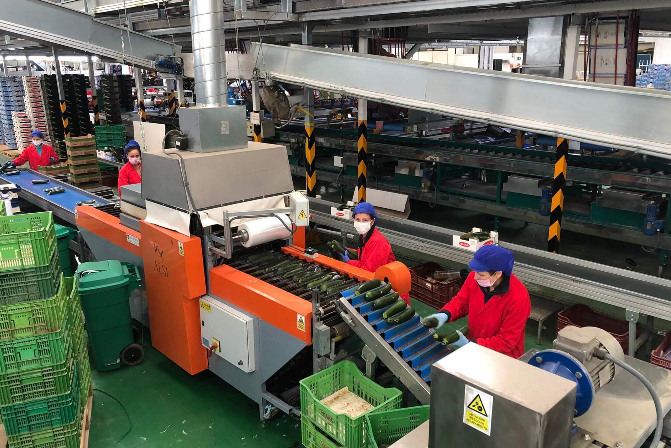 Vicasol pone en marcha más de una veintena de protocolos de seguridad e higiene en sus cuatros centros de producción