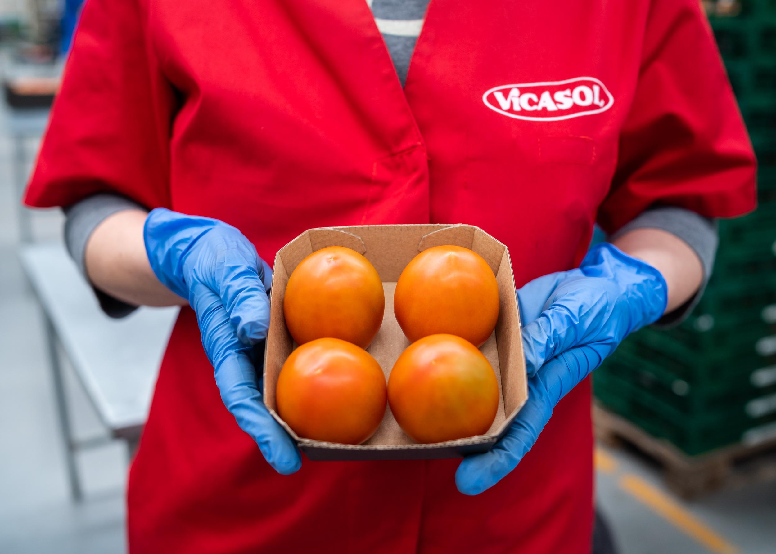 Vicasol afronta 2021 con la mirada puesta en el mercado gourmet, la sostenibilidad y el bienestar de sus socios agricultores
